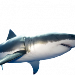 Best free Sharks Icon