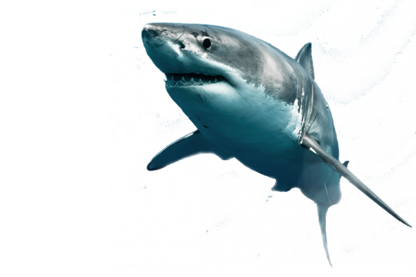 Download for free Sharks PNG Picture