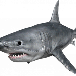 Download and use Sharks  PNG Clipart