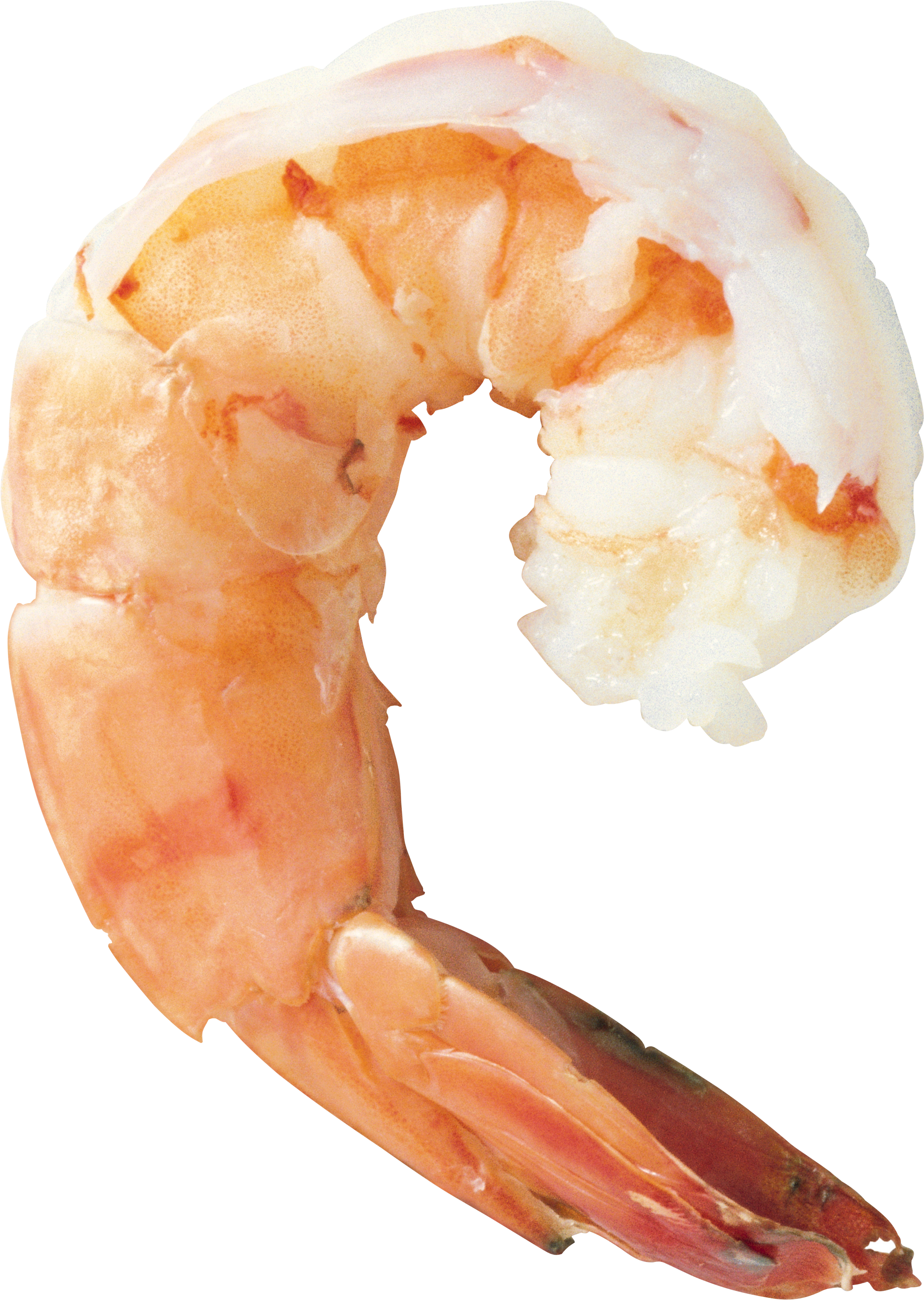 Best free Shrimps Icon PNG