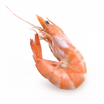 Download and use Shrimps PNG Image