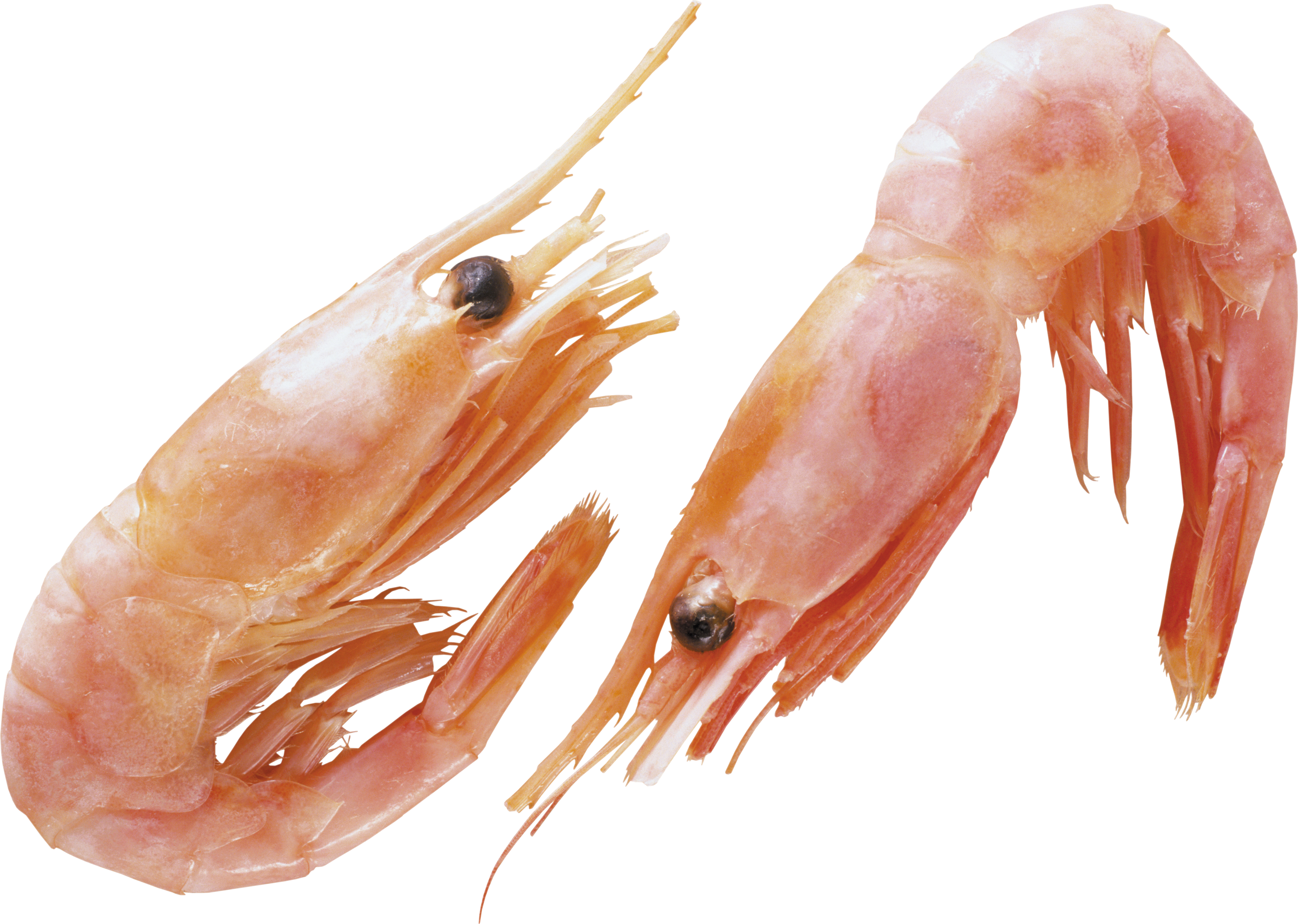 Free download of Shrimps Icon Clipart