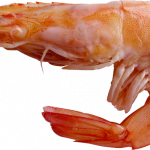 Grab and download Shrimps PNG Picture