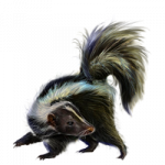 Best free Skunk PNG Icon