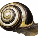 Download for free Snails PNG Picture