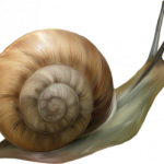 Download and use Snails  PNG Clipart