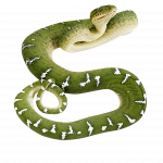 Download and use Snake PNG Image
