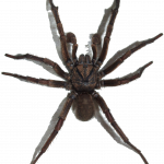 Free download of Spider PNG Picture