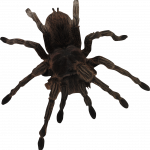 Download and use Spider Transparent PNG File