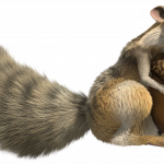 Download for free Squirrel Transparent PNG File