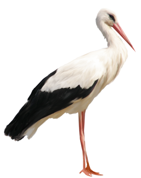 Download this high resolution Stork PNG Image Without Background