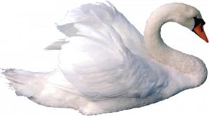 Now you can download Swan Icon Clipart