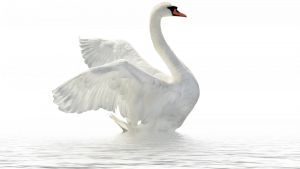 Best free Swan PNG Icon
