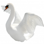 Best free Swan Icon PNG