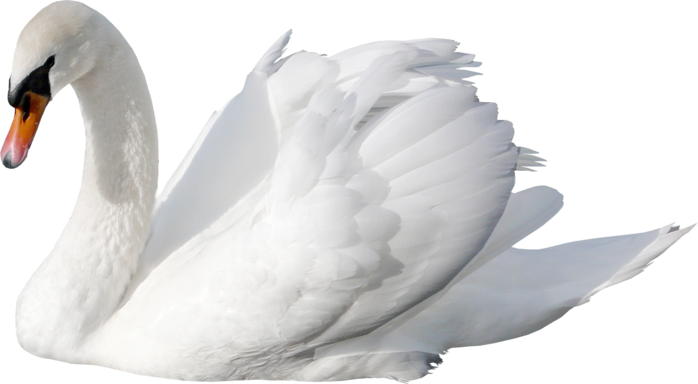 Download for free Swan High Quality PNG