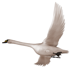Download for free Swan Icon Clipart