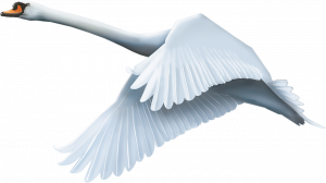 Download and use Swan Transparent PNG Image