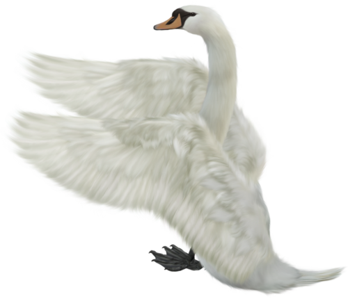 Download this high resolution Swan PNG