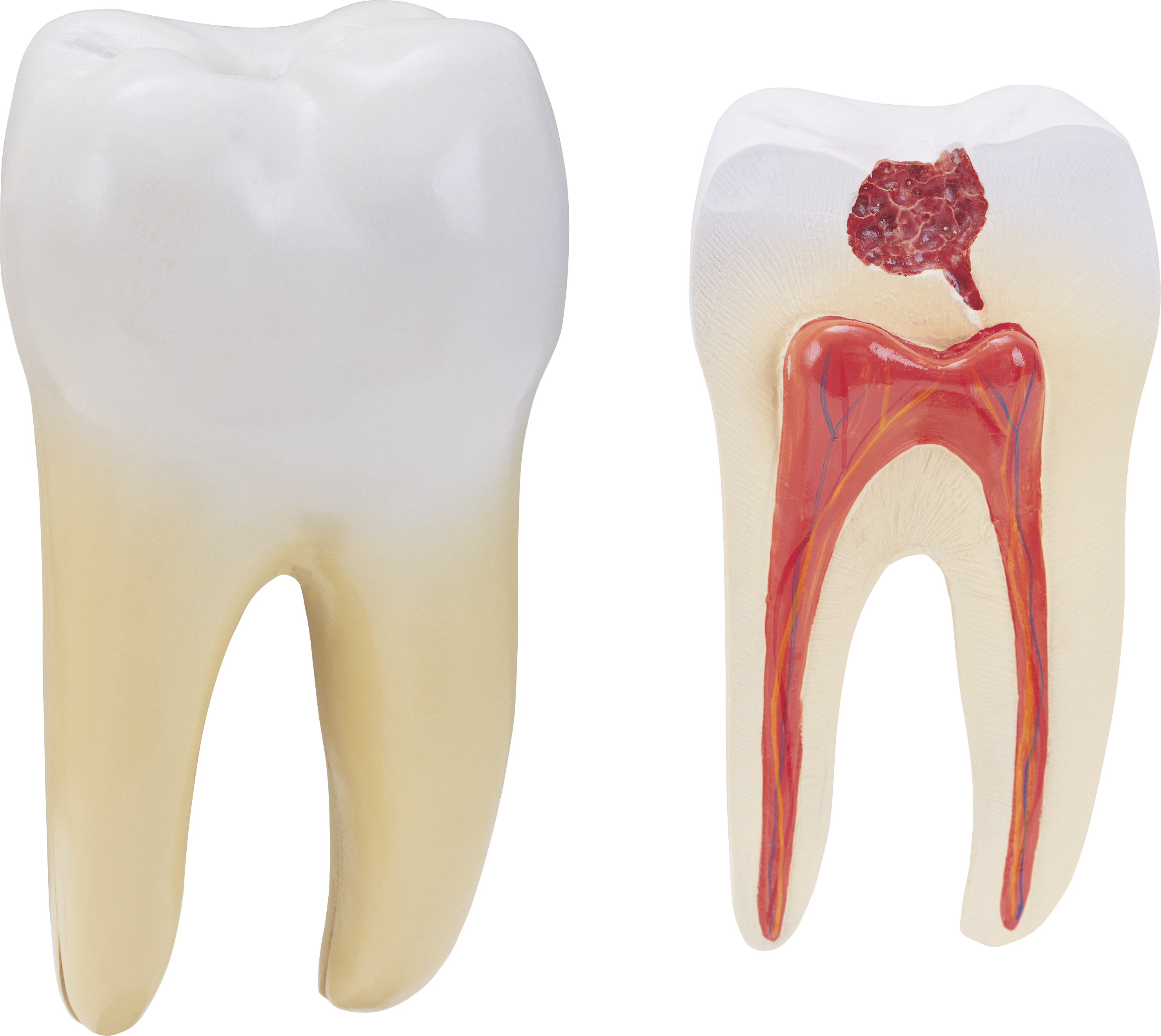 Download this high resolution Teeth  PNG Clipart