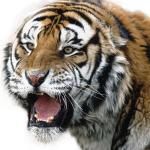 Download for free Tiger Icon PNG