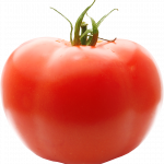 Download for free Tomato PNG Image Without Background