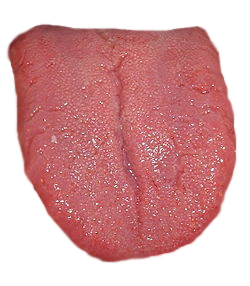 Download for free Tongue PNG Image Without Background