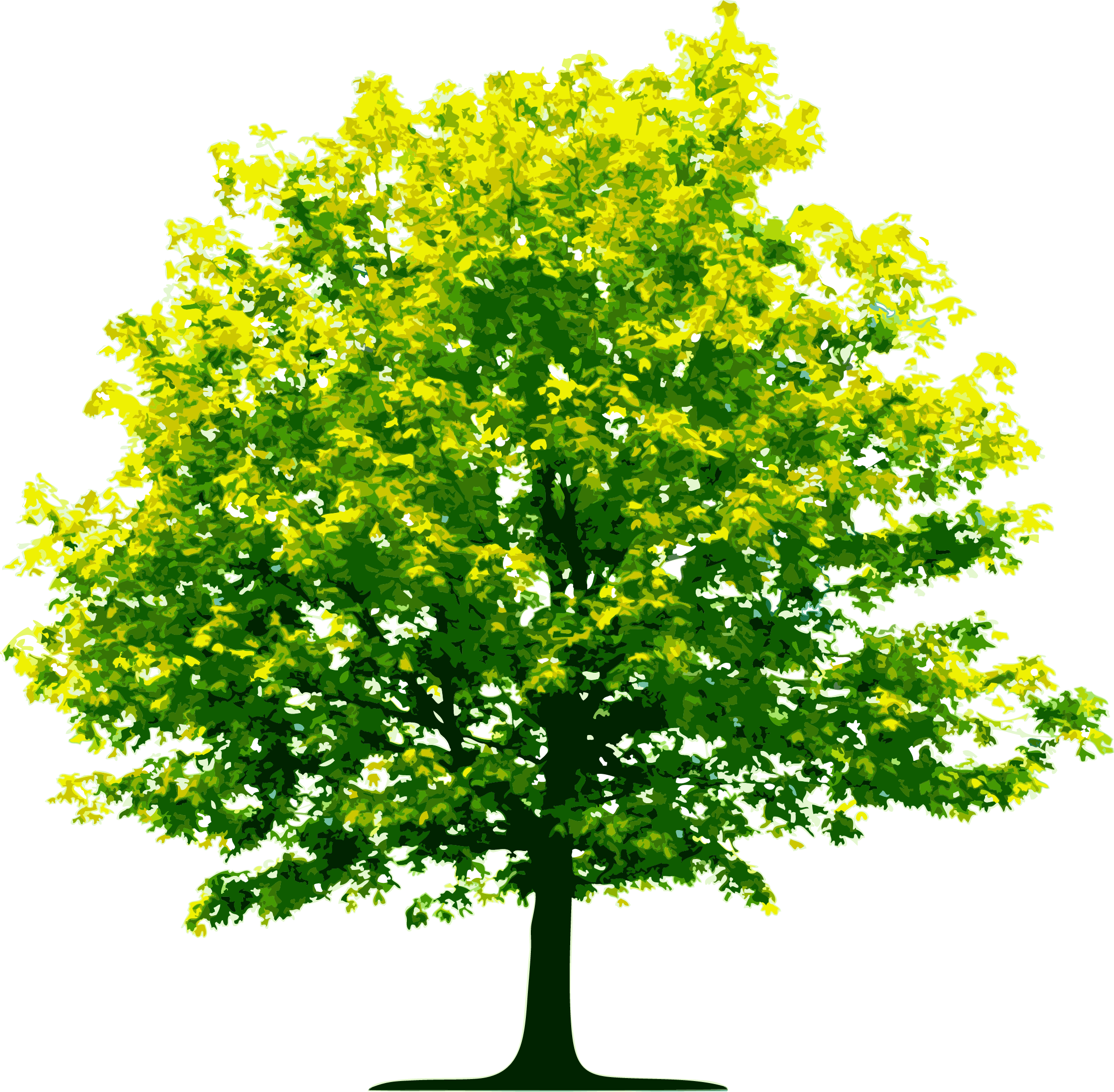 Tree PNG Picture