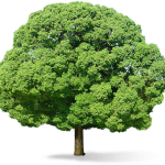 Free download of Tree In PNG