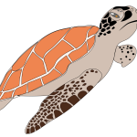Now you can download Turtle PNG Picture
