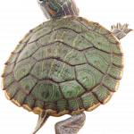 Download and use Turtle Icon Clipart