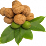 Grab and download Walnut  PNG Clipart