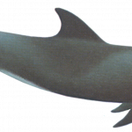 Download for free Whale PNG Image Without Background