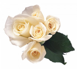 Download for free White Roses In PNG
