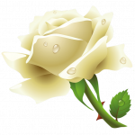 Grab and download White Roses PNG Image
