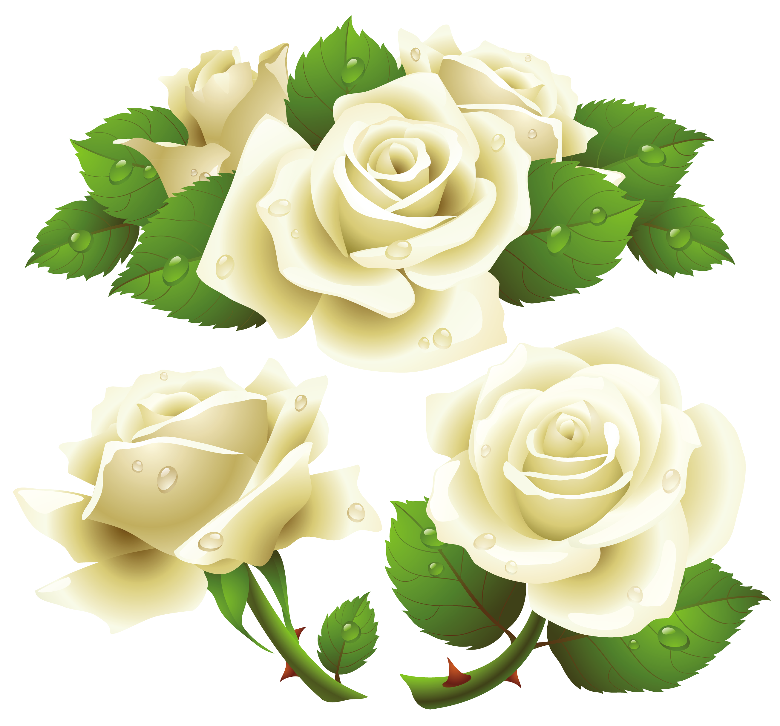 White Roses Transparent PNG Image   Web Icons PNG