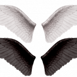 Free download of Wings PNG Picture