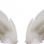 Free download of Wings Transparent PNG Image