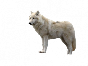 Now you can download Wolf Icon